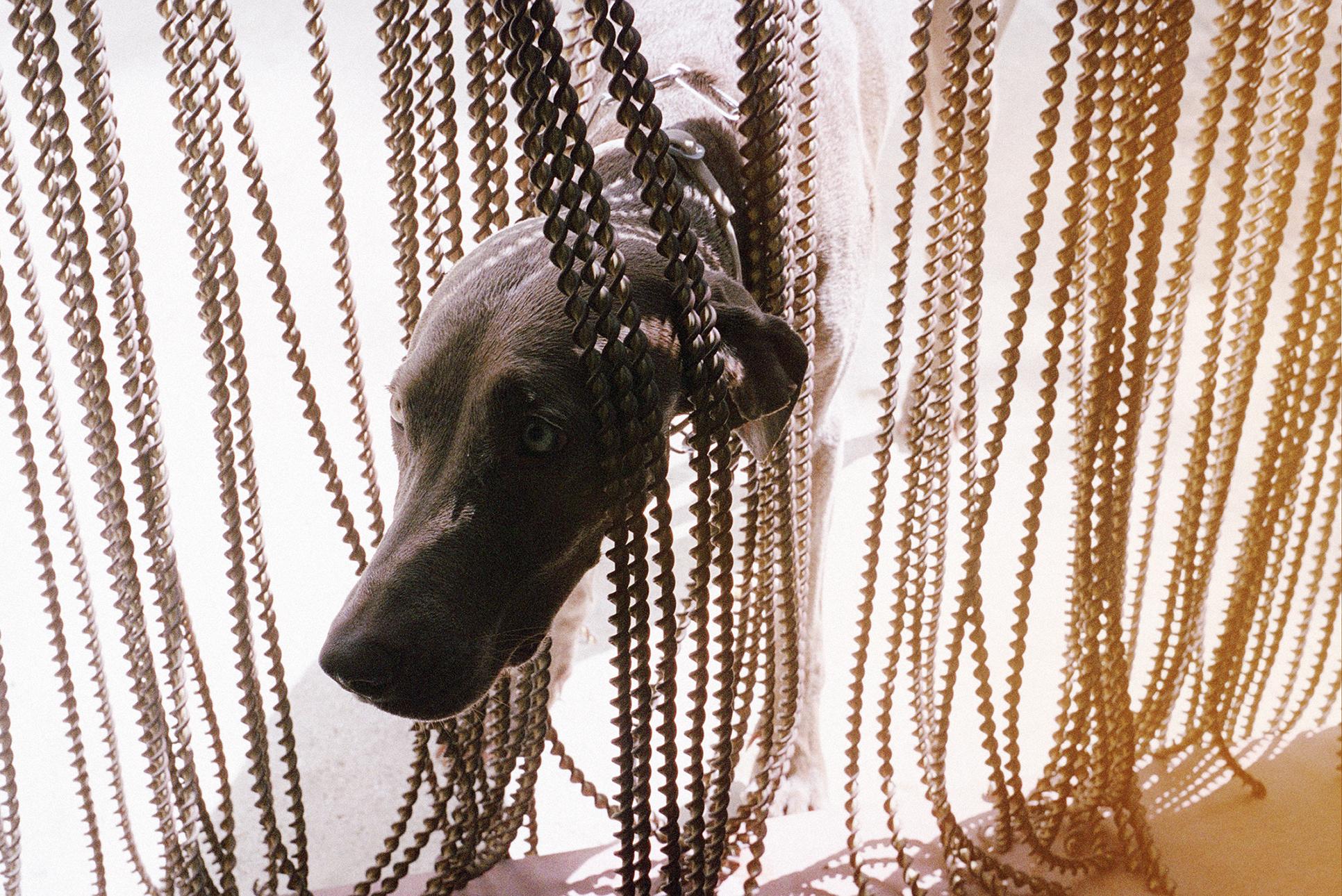 Greta-cortina