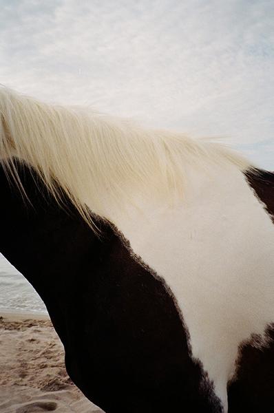 horseinmenorca_esperanzamoya