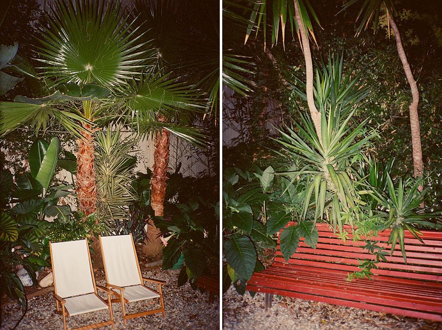 plants_esperanzamoya_02