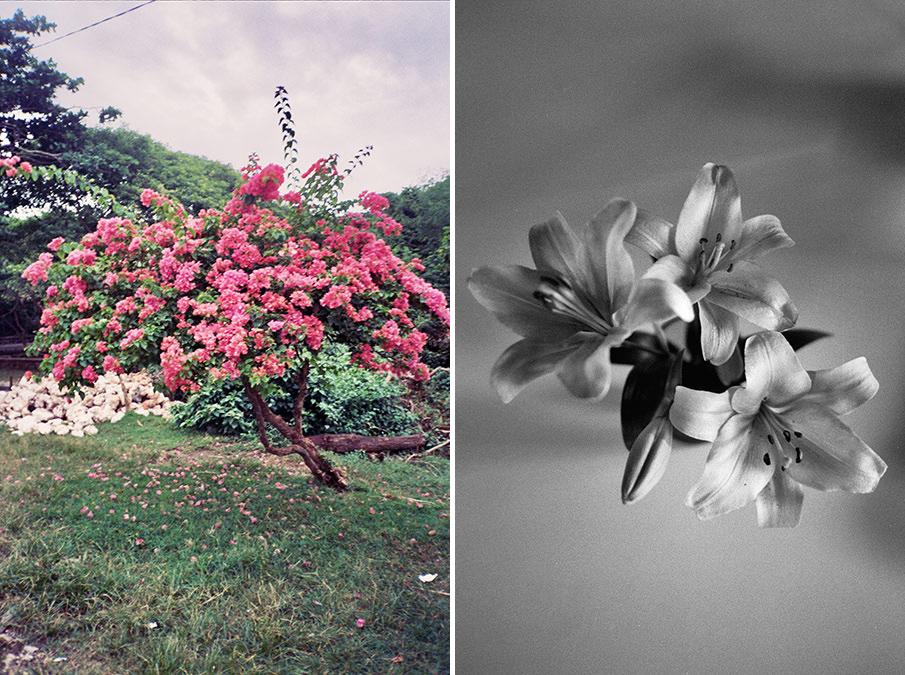 plants_esperanzamoya_04