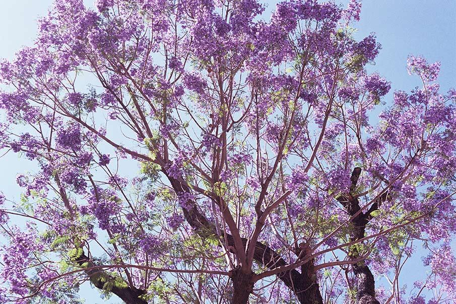 plants_esperanzamoya_07