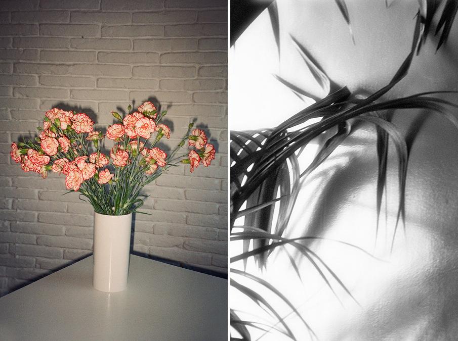 plants_esperanzamoya_08