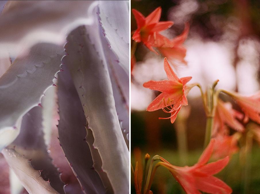 plants_esperanzamoya_10